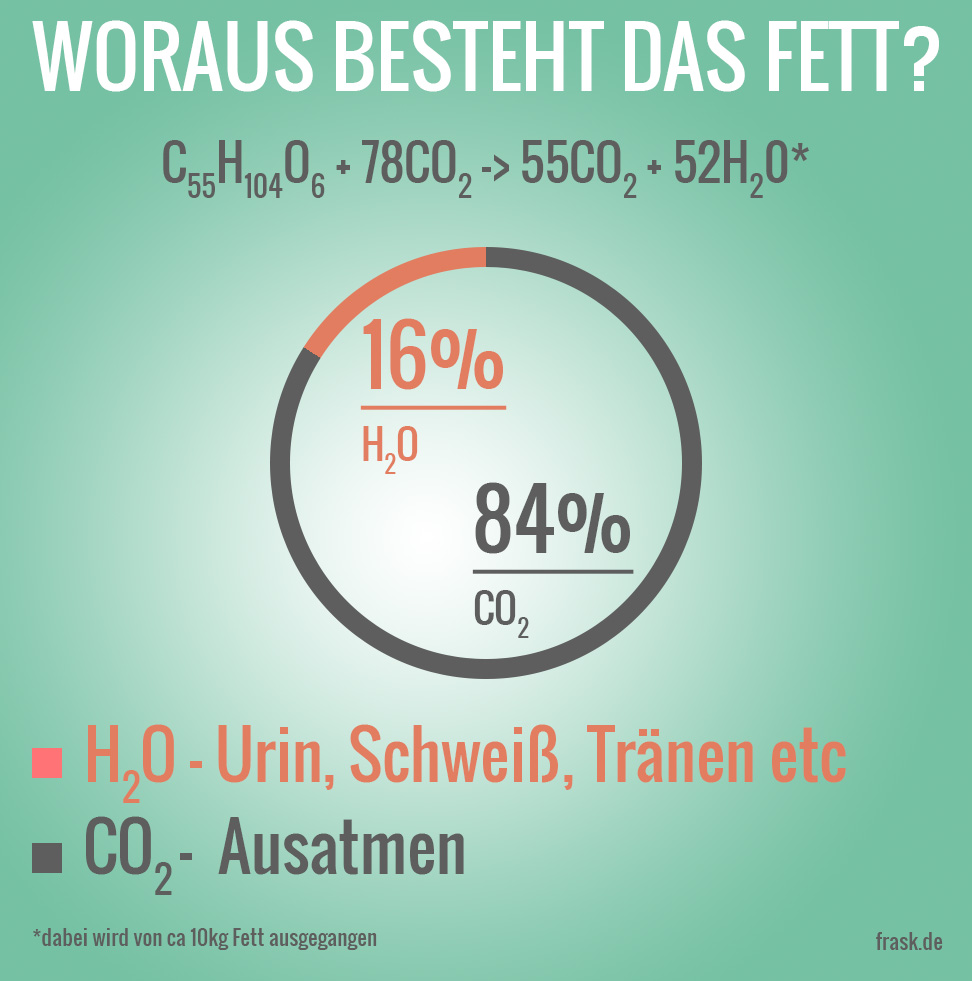 fettverbrennung_infografik
