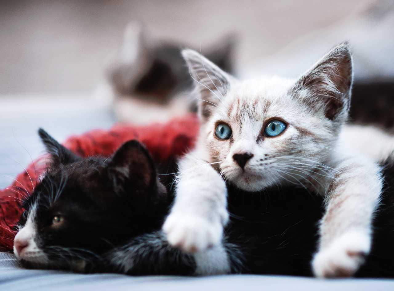 studie coronavirus katzen tiere frettchen